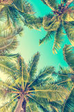 Blue sky and palm trees view from below, summer concept royalty free stock image