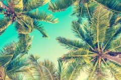 Blue sky and palm trees view from below, vintage summer background. Blue sky and palm trees view from below, vintage style, summer background royalty free stock photo