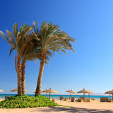 Blue sky, palm and umbrellas Stock Photography
