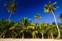 Blue sky palms Stock Image