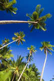 Blue sky palms Stock Photo