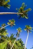 Blue sky palms Stock Photo