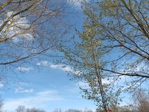 Blue sky plus branches. Blue sky and trees stock images