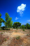 Blue sky of provence Stock Photo