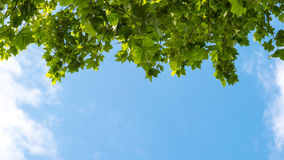 Blue sky with puffy clouds and fresh green tree Stock Images
