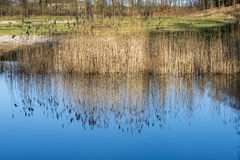 Blue sky refection in the water Stock Photos