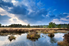 Blue sky reflected in swamp water Stock Photos