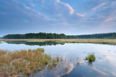Blue sky reflected in wild lake Royalty Free Stock Photography