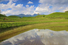 Blue sky and rice terrace Royalty Free Stock Photo