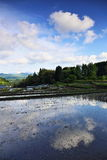 Blue sky and rice terrace Royalty Free Stock Image