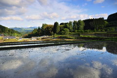 Blue sky and rice terrace Royalty Free Stock Photography