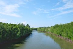 Blue sky with a river and mangrove forest. Seaside area at Chumphon, Thailand royalty free stock photo