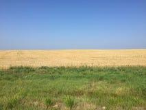 Blue sky, rye field, green grass Stock Photography