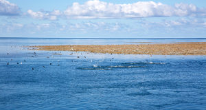Blue sky sea clouds and coral reef with seagulls. Exposed coral reef at low tide with seagulls feeding on bait fish Stock Image