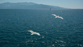 Blue sky, sea and flaying seagulls Royalty Free Stock Photo