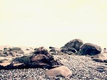 Blue sky , sea water level. Lonely fallen tree on empty stony coastline. Death tree. Royalty Free Stock Images