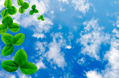 Blue sky with a shamrock. The sky with a shamrock stock images