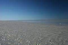 Blue sky and shell speckled beach melt at eighty mile beach Western Australia Royalty Free Stock Photo