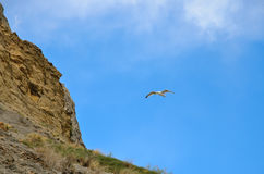 Blue sky, the slope mountains, and flying bird Seagull stock image