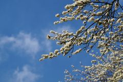 The power of waking life after winter, flowering trees Royalty Free Stock Photos
