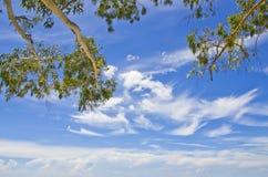 Blue sky and small tree. Royalty Free Stock Photo
