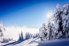 Blue sky and snow covered trees above the clouds Stock Image