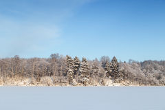 Blue sky, snowy forest and lake in Finland Royalty Free Stock Photo