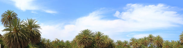 Blue sky, soft clouds and palm trees tops Royalty Free Stock Photography