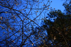 Blue sky in the spring forest stock photo