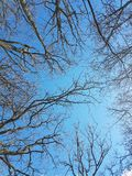 Blue sky. With spring tree branches. Swedish Stock Photos