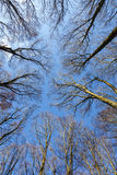 Blue sky with structure of forest Stock Images
