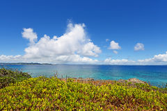 Blue sky and subtropical plants of Okinawa Royalty Free Stock Image