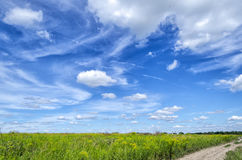 Blue sky in summer. Blue sky summer day in the wild countryside Stock Images