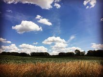 Blue sky. Summer field in upstate New York Royalty Free Stock Photos