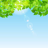 Blue sky with sun and green leaves Royalty Free Stock Photo
