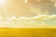 Blue sky and sun rays over the plain Royalty Free Stock Photo