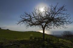 Blue sky, sun, tree and field Royalty Free Stock Photos