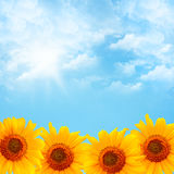 Blue sky and sunflowers Stock Image