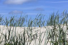 Wild grasses grow on sandy dunes Royalty Free Stock Images