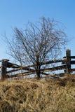 Blue Sky Sunny Spring Day Wooden Fence Single Tree royalty free stock photo