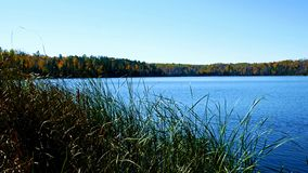 Blue sky with sunshine over beautiful serene remote northern Minnesota lake. With autumn colors and reeds along shoreline stock video footage