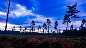 Blue Sky in Swinley Forest, Berkshire royalty free stock images