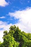 Blue sky and tree Stock Photo