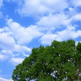 Blue sky and tree. Blue sky and green tree Royalty Free Stock Image