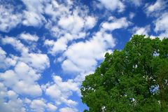 Blue sky and tree. Blue sky and green tree Royalty Free Stock Photo