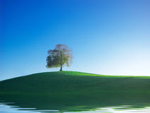 Blue sky and tree Royalty Free Stock Photos