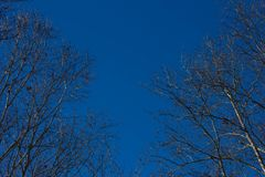 Blue Sky with Tree Boarder. Clear blue sky with trees as a boarder on a nice Autumn day Stock Photo