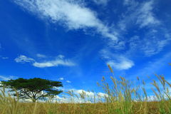 Blue sky, tree and grasses. Blue sky on a cloudy day. Grasses in foreground and big tree in a far sight Stock Photos