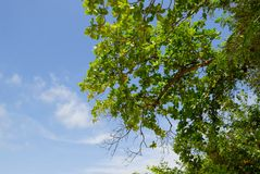 Blue Sky. With tree on the Krabi   in the Thailand Royalty Free Stock Photography