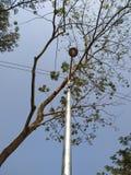 Blue Sky, tree And lamppost  - Bangladesh royalty free stock photos